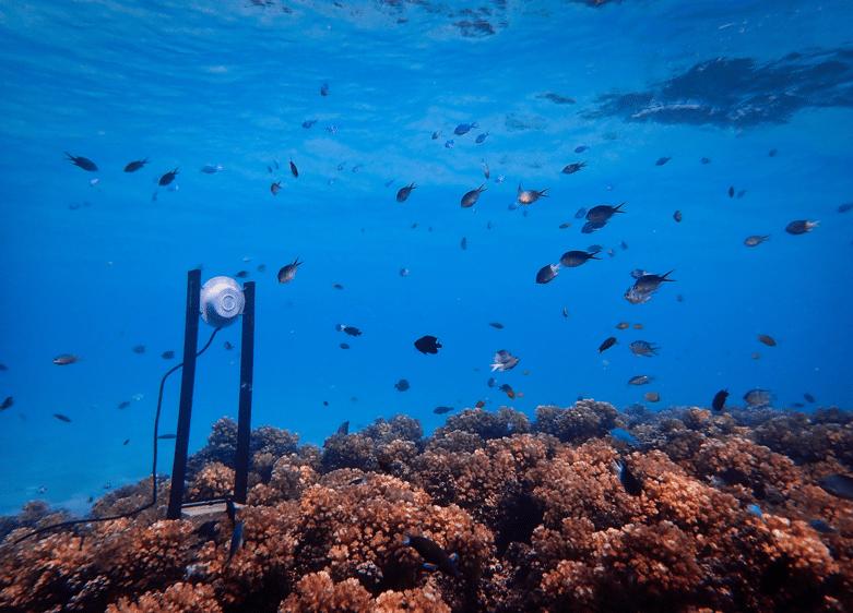 Coral • eat blue™